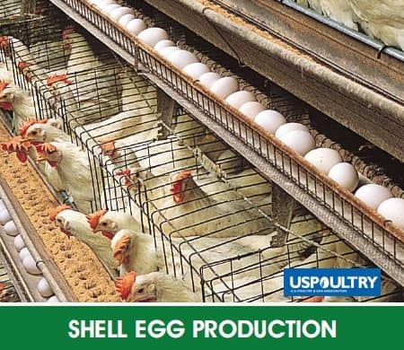 Shell Egg Production