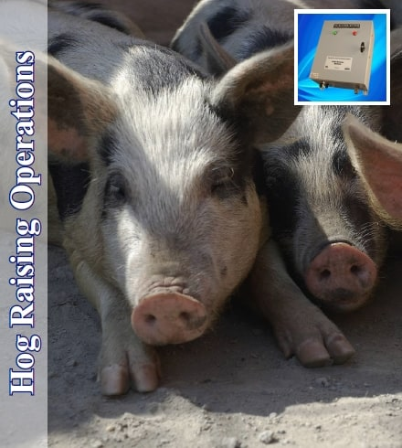 Hog Raising Operations