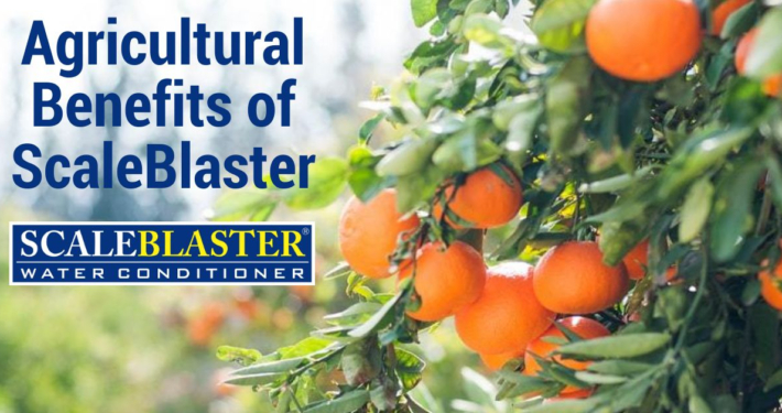 Agricultural Benefits of ScaleBlaster 710x375 - News