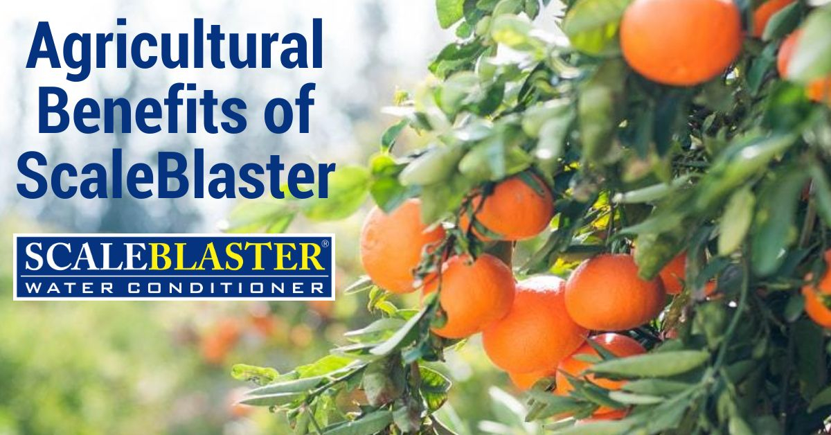 Agricultural Benefits of ScaleBlaster - Agricultural Benefits of ScaleBlaster